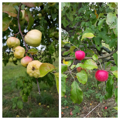 Kwaśne Jabłko