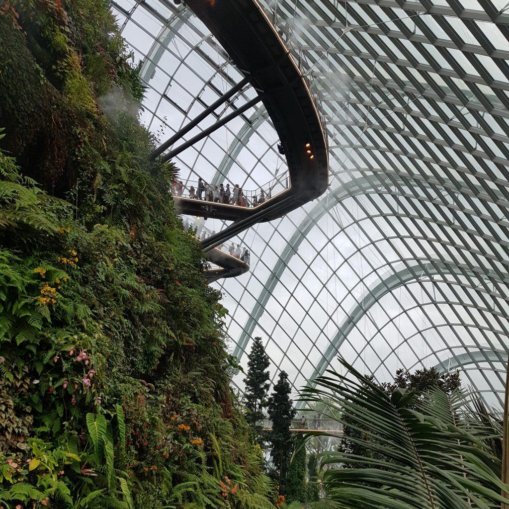 zobaczyć singapur cloud forest 3