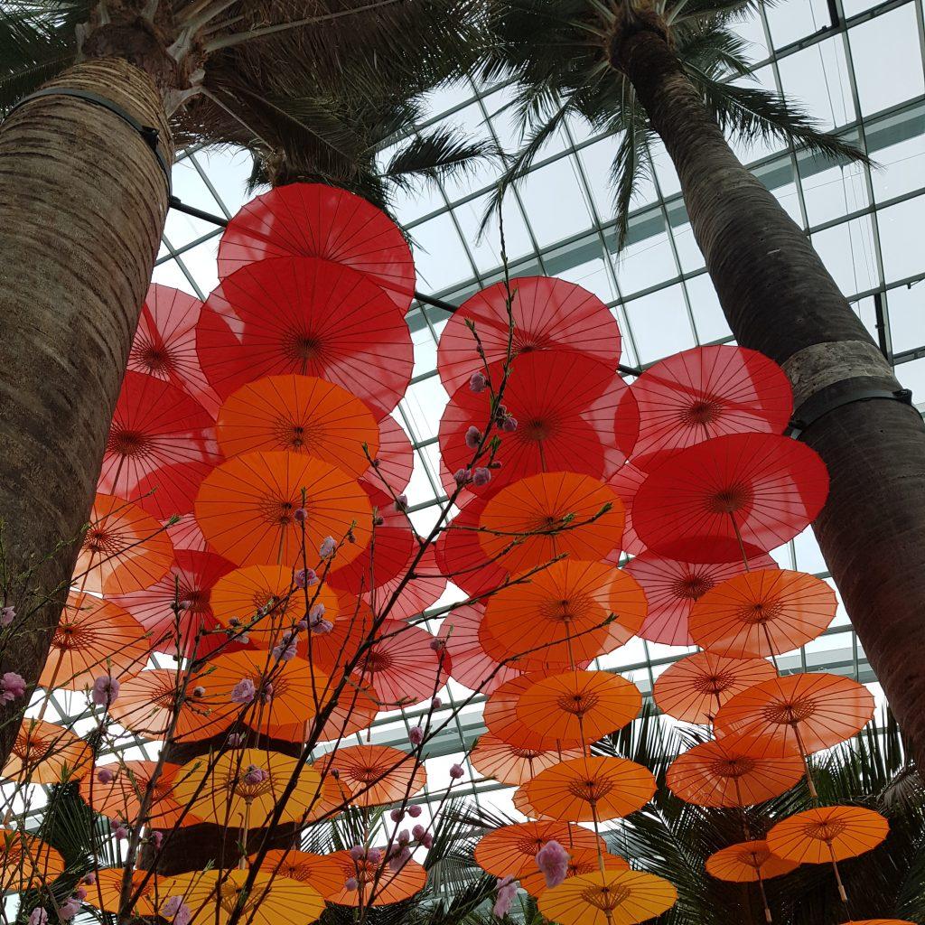 zobaczyć singapur flower dome