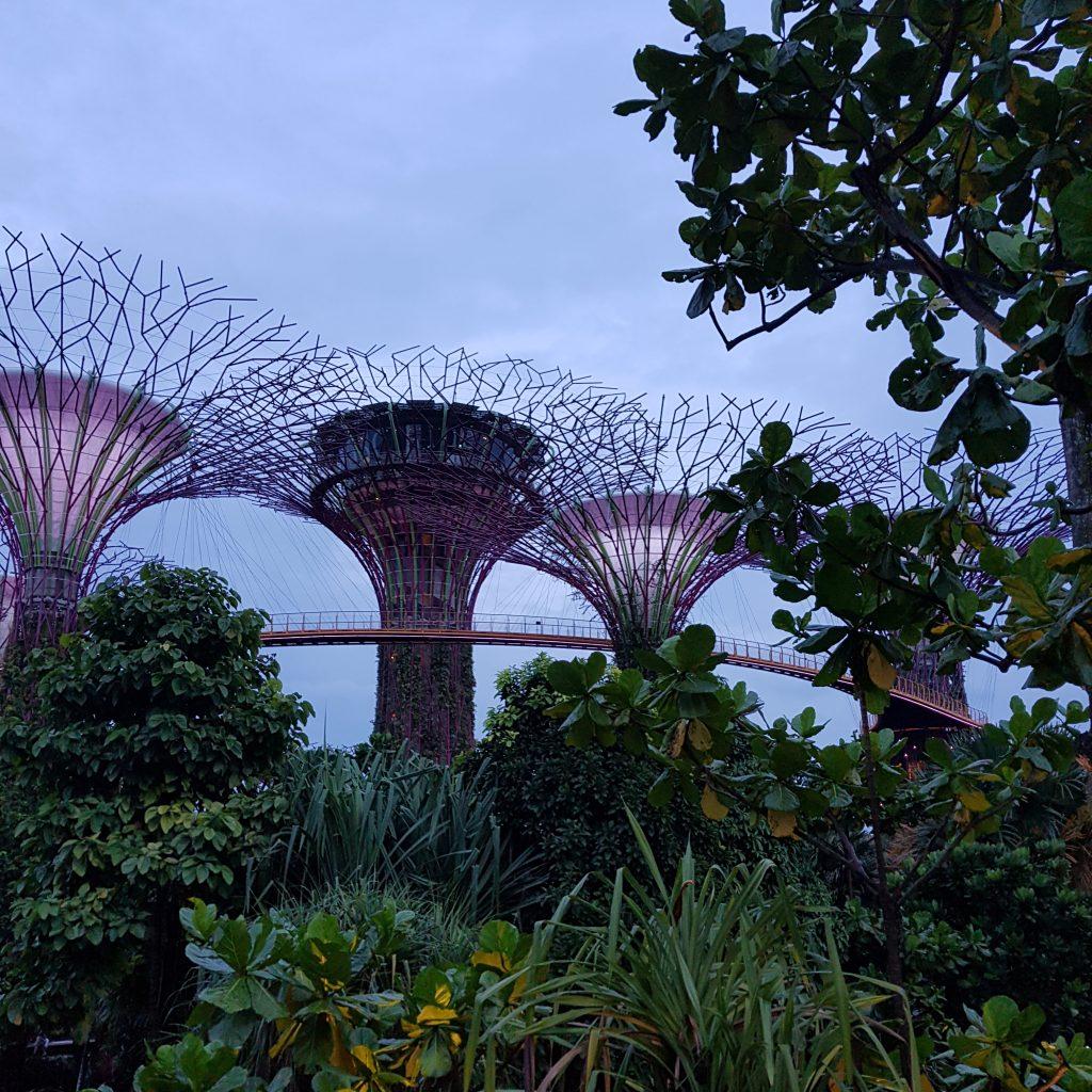 zobaczyć Singapur nocą