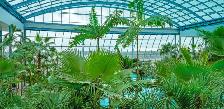 Prawdziwe tropiki już 20 lutego w Polsce – Suntago Wodny Świat