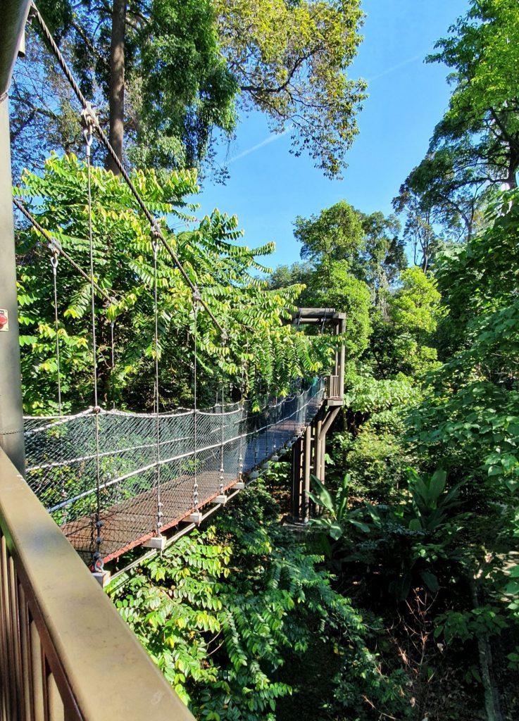 Bukit Nanas Forest Reserve
