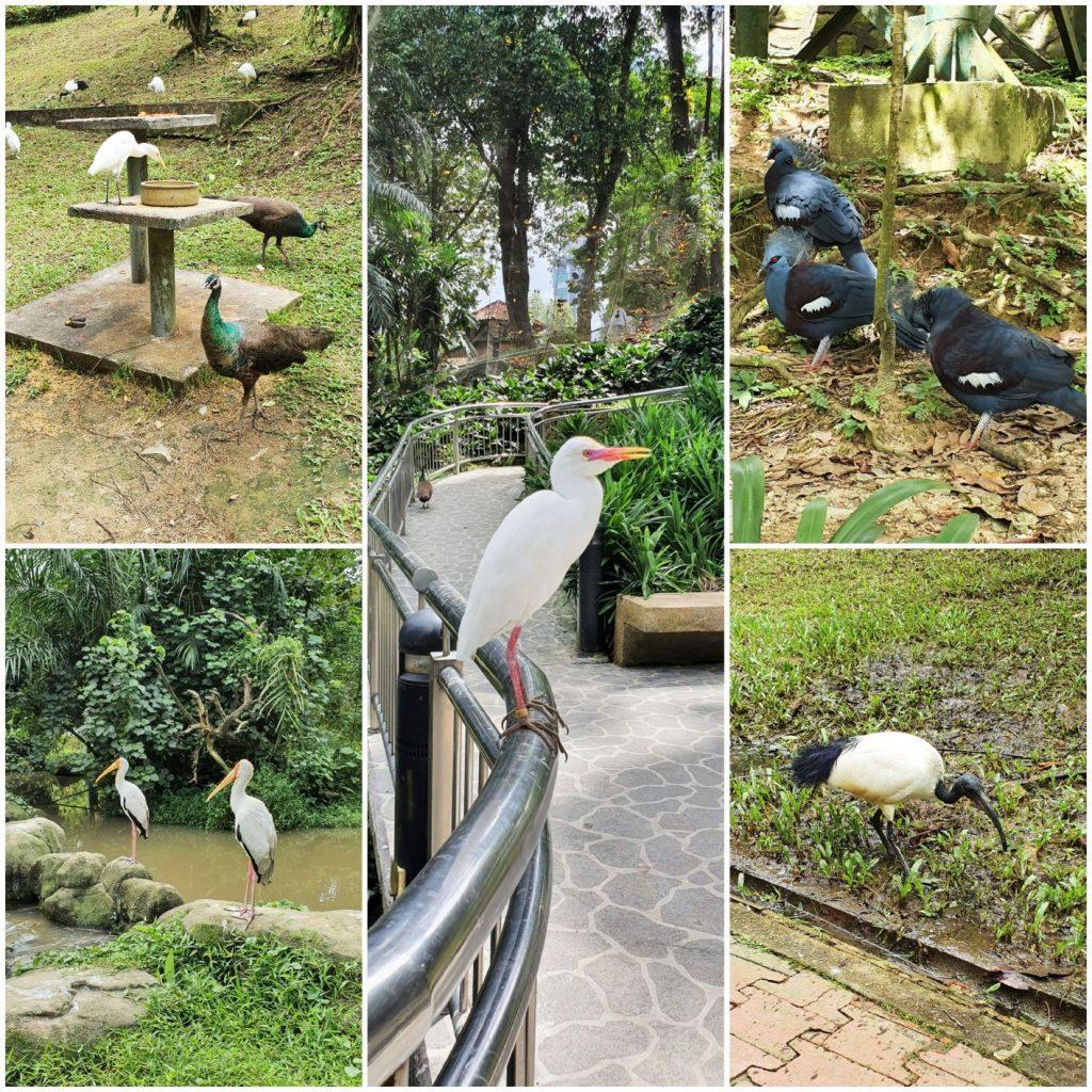 ptaki w KL