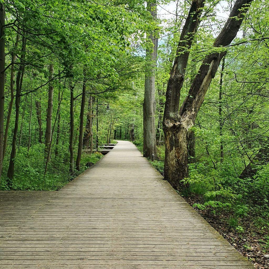 Las w Sopocie